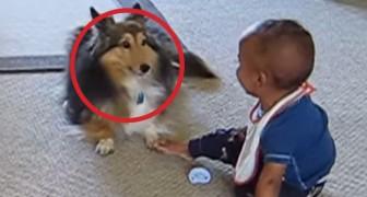 Si tienen dudas sobre la importancia de perros en la etapa de crecimiento de los niños, miren esto!