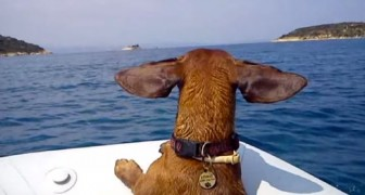 Questo video di un bassotto in vacanza al mare parla chiaro: non abbandonarli, PORTALI CON TE!