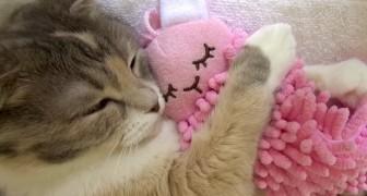 Tem coisa mais fofa que um gato que abraça o seu ursinho de pelúcia?