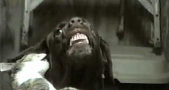 Deze hartstochtelijke kusjes laat zelfs de hond lachen!