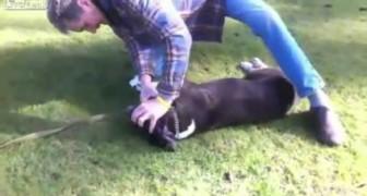 Um cão está morrendo com um ataque cardíaco, mas no momento certo um anjo intervém!