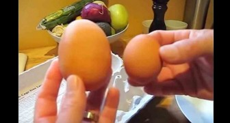 An extraordinary and disturbing secret is hiding in this big egg!