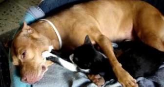 Questo va ben oltre la semplice convivenza tra cani e gatti...