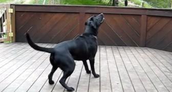 Si los perros tienen un sueño en el cajon, seguramente debe ser sin dudas este!
