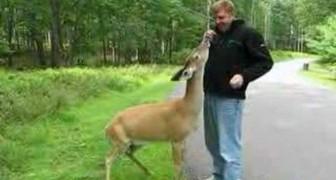 Olha o que pode acontecer enquanto alguém passeia no bosque