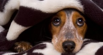 Ne ratez pas les expressions de ces chiens pris en flagrant délit!
