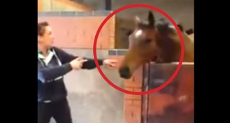 I never expected to see a horse DANCE like this ! He's got some moves !