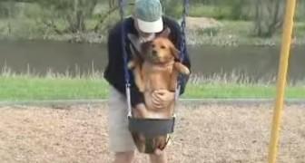 Dit is een van de meest absurde dingen die ik een hond ooit heb zien doen
