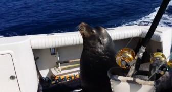 Questo leone marino ha trovato il modo di ottenere un pasto facilissimo