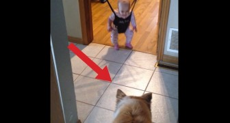Look at this CUTE dog teaching a baby how to jump !!