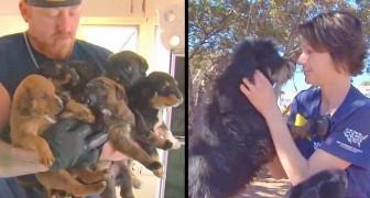 Um grupo que socorre os animais chega em uma casa: o que encontram é uma cena horrível