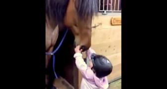 Una mama dice a su hija de saludar al caballo y ella lo hace en manera sorprendente