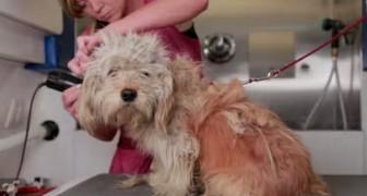 Een meisje red het leven van een hond.. met stijl! Geniaal!