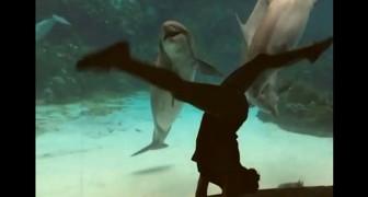 Uma mulher dança na frente de um aquário, veja a reação do golfinho...
