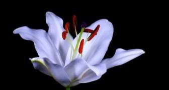Cada flor esconde um segredo: a natureza como você nunca viu