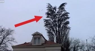 Es sieht aus wie ein Baum voller Vögel, doch kurz darauf... werdet ihr mit offenem Mund zurückbleiben