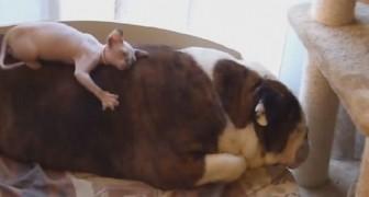 Kijk wat deze hond laat doen door zijn kleine vriend. Mierzoet!