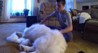 Un ragazzo inizia a spazzolare il suo cane... Il risultato finale ha dell'incredibile!