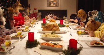 13 dogs and 1 cat: here's the funniest Christmas dinner  you've ever seen !