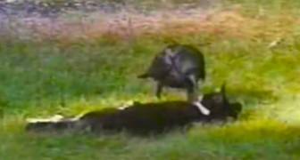 2 bejaarden observeren een zwerfkat, maar als ze zien wie zijn vriend is, zijn ze verbaasd