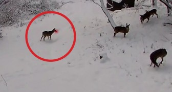 A camera is placed in the woods: this video will make you smile