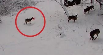 Viene posizionata una telecamera nel bosco: ciò che riprende vi farà sorridere