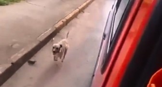 Zijn baasje wordt afgevoerd met de ambulance: wat de hond doet is AANDOENLIJK.