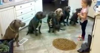 Guardate cosa fa questa bimba con 6 pit bull: e questi sarebbero cani AGGRESSIVI?