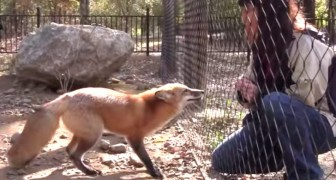 Here is how this fox reacts when it sees her friend. Adorable!