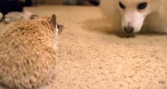 Zwei neue Freunde lernen sich kennen: Sie sind so süß und einfach unwiderstehlich