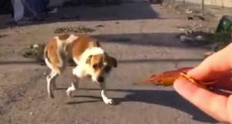 Après un accident, ce chien vivait dans les poubelles. Voilà comment il est MAINTENANT.