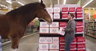 Mientras este joven compra cerveza, recive una visita ...algo inesperada