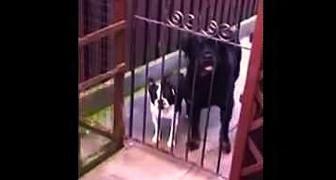 Un uomo saluta un piccolo cane. La sua risposta... ESILARANTE!