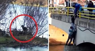 Um cachorrinho fica preso em um canal, o que as pessoas fazem para salvá-lo merece aplausos