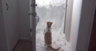 Quiere desesperadamente salir pero hay mucha nieve: miren como se las arregla!