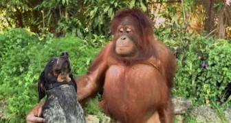 Ce que font ces animaux vous laissera sans voix après quelques minutes. Apprenons d'eux!