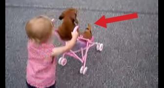 Het kleine meisje duwt de buggy en de hond ontspant zich: deze twee zijn een giller!