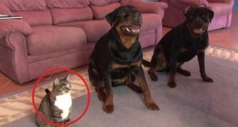 Die Erziehung der beiden Hunde ist schon super, aber der dritte Teilnehmer verdient einen APPLAUS