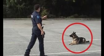 Der Polizist hebt einfach nur einen Finger: Seht selbst, was der Hund darauf macht
