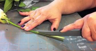 Sie schneidet die Stiele von Rosen ein: Ihr Experiment hat ein tolles Ergebnis