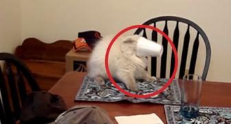 Das können Katzen besonders gut... Echt ein Brüller!