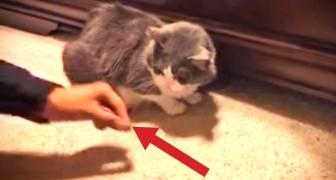 Tenta dar um prêmio para seu gato, mas continua a acontecer algo muito engraçado