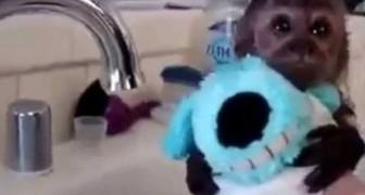 Baño a un cachorro de monito