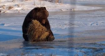 O urso brincalhão