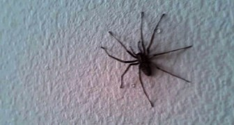 There's a huge spider on the wall of the living room, but wait until you see the whole room !!