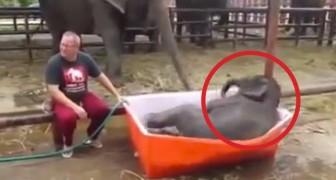 L'elefantino deve fare la doccia: quello che succede fa morire tutti dalle risate