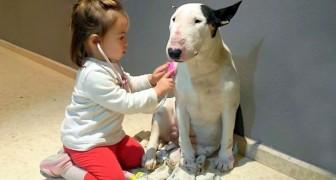 Bullterriern Noa gör sig god som patient hos sin unga läkare. Bedårande!