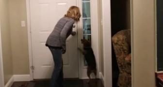 Il rentre à la maison après 2 ans: c'est ce qu'on appelle un accueil de folie!