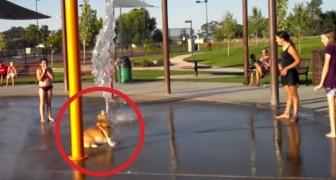 Levam este cão no parque aquático: sua reação vai alegrar o seu dia!