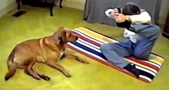 Lei prova una difficile posizione di yoga. La reazione del cane? Esilarante!